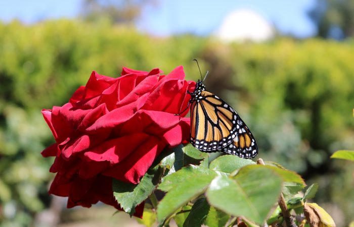 Dominguez Rancho Adobe Garden Tours