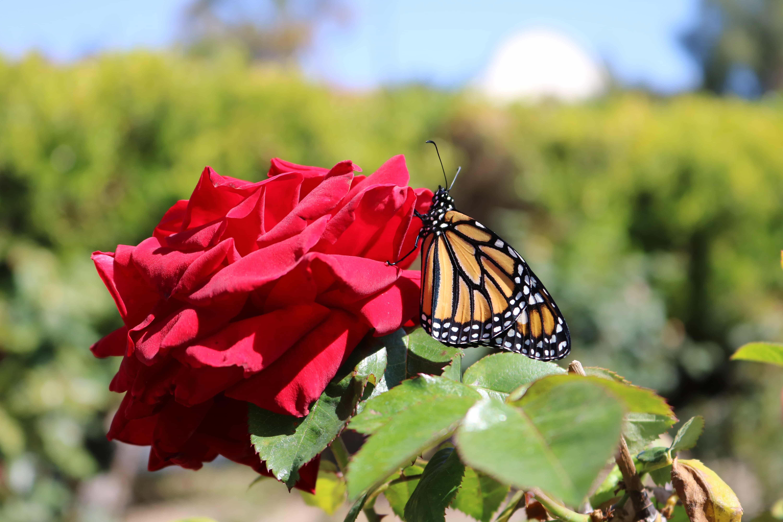 Dominguez Rancho Adobe Garden Tours